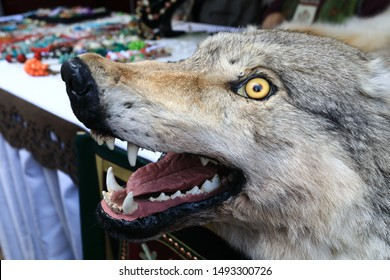 Stuffed wolf head with yellow eyes outdoor
