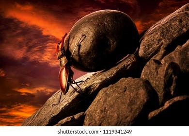 Stug beetle pushing heavy stone boulder up on hill.Sisyphus metaphore.Concept motivation.Hard work.Sunset.