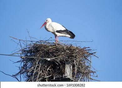 Stuifzand, Países Bajos - 2 de abril de 2020: nido de cigüeñas en el mástil de un ferrocarril, Países Bajos