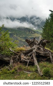 Stump in Austrian Alps - Hintersee