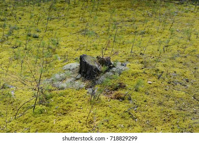 Stump in the clearing.