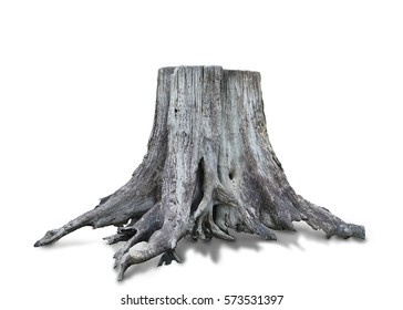 Stump dead tree isolated on white background. This has clipping path.