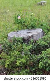 Stump with Flower