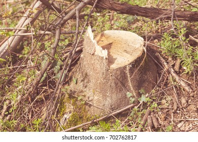 a stump in the forest with grass around