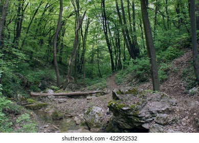 Stump in the forest, over a creek