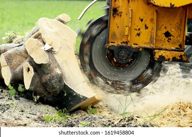 Stump Grinding a Tree Trunk