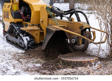 Stump grinding with a view from the right where the cutting disc is visible in close proximity. During the grinding process, the stump shavings fly through the air. The yellow stump grinder grinding.