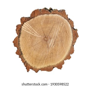 stump isolated on white background. Cross section, ring or slice wooden