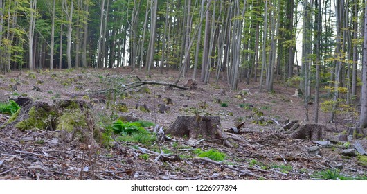 stump of an old tree felled, South Bohemia, Czech Republic
