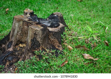stump on green grass or garden,Lawn and stump