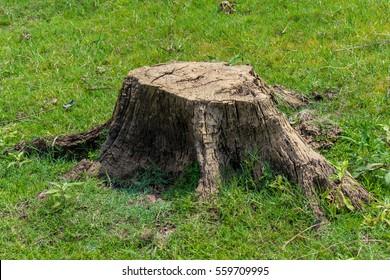 stump on green grass or graden