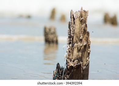 Stump on sea