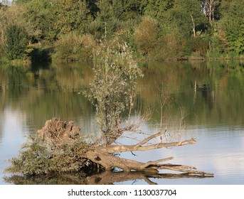 Stump in the Saône river located in the small village of Saint-Jean-Le-Priche near the city of Mâcon, France