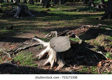 Stump as a symbol of deforestation