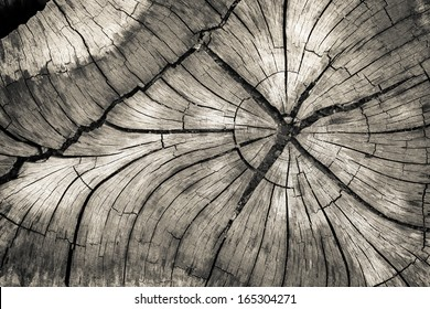 Stump of tree felled