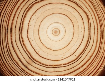 Stump of tree felled - section of the trunk with annual rings. Slice wood.