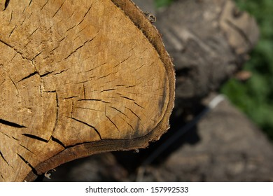 the stump of the tree on the nature