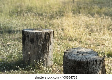 Stump tree plant on green grass field