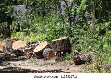Stumps from felled trees. Felling trees in the city.