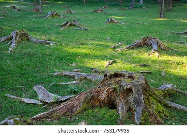 Stumps as a symbol of deforestation