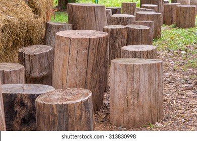 Stumps used as chairs outside in the garden.