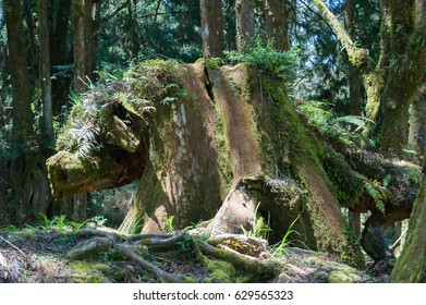 Stumps in the woods