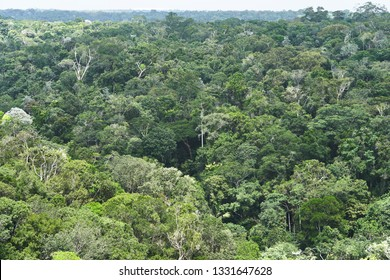 Stunning Aerial View of Amazon Canopy. The Roof of the World's Rainforest, Treetop of Amazing Unique Amazonian Species