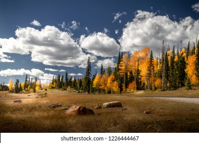 Stunning Autumn view of the highway  with incredible pine trees and fall foliage to Brian Head and Cedar breaks National Monument in Sothern Utah.