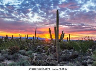 Stunning AZ desert sunset with saguaro cactus
