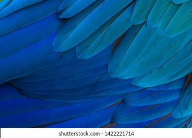 The stunning beauty of nature. Gold and blue macaw ( ara ararauna)