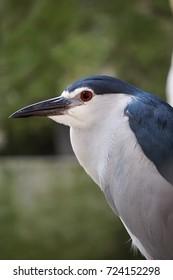 Stunning birds portrait