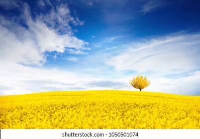 Stunning bright colorful landscape for wallpaper. Yellow field of flowering rape and tree against a blue sky with clouds. Natural landscape background with copy space.
