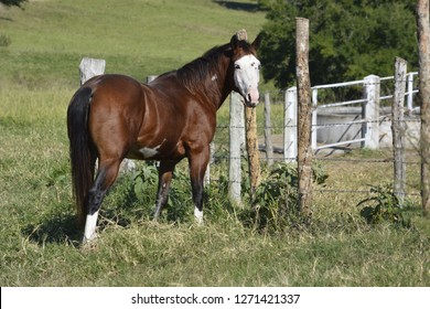 Stunning brown horse