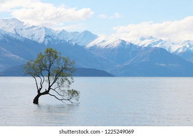 a stunning, calm, beautiful view of wanaka tree in Lake Wanaka, New Zealand