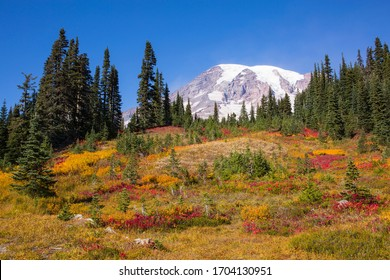 Stunning, colorful fall foliage at Mt. Rainier National Park in Washington state