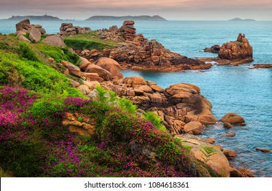 Stunning colorful flowers and spectacular coastline with cliffs in Perros-Guirec, Brittany region, France, Europe