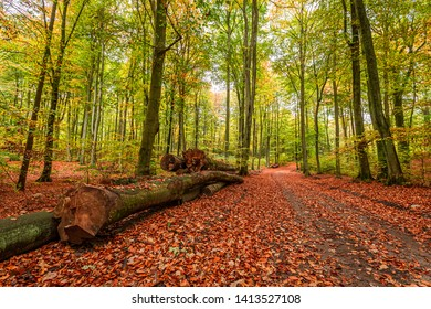 Stunning and colorful forest in the autumn, Poland