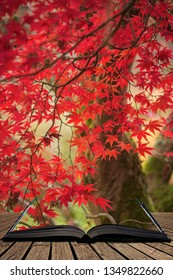 Stunning colorful vibrant red and yellow Japanese Maple trees in Autumn Fall forest woodland landscape detail in English countryside coming out of pages in magical story book