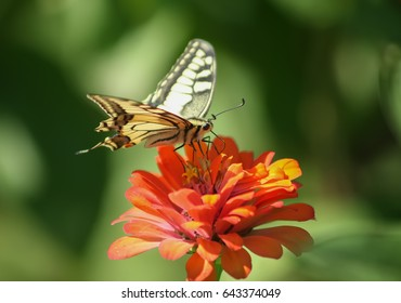 Stunning colourfull butterfly on flower