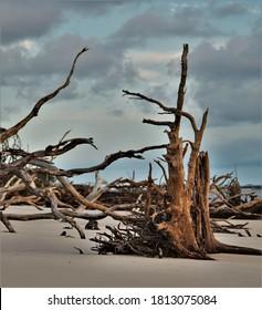 Stunning Driftwood at the Beach