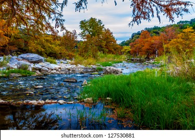 Stunning Fall Colors of Texas Cypress Trees Surrounding the Crystal Clear Texas Hill Country Pedernales River.