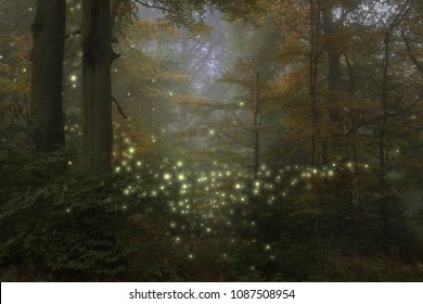 Stunning fantasy style landscape image of fireflies glowing in night time forest scene
