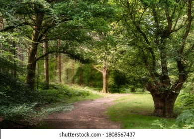 Stunning forest landscape image during Summer with evening sunlight backlighting the leaves on the trees and foliage on the ground