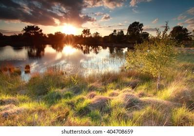 stunning gold sundown on swamp in spring