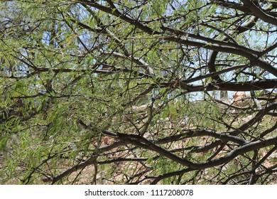 A stunning image of a desert tree in Tuscon, Arizona.