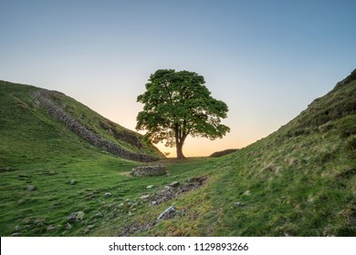 Stunning landscape image of Sycamore Gap at Hadrian's Wall in Northumberland at sunset with fantastic late Spring light