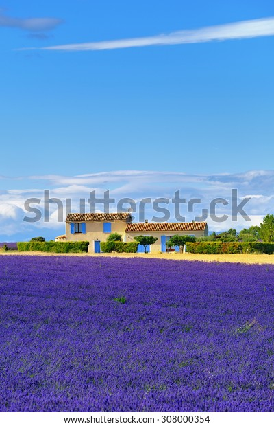 Stunning landscape with lavender field and farmhouse on background. Plateau of Valensole, Provence, France.