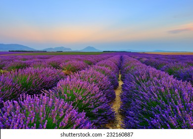 Stunning landscape with lavender field at sunset. Plateau of Valensole, Provence, France