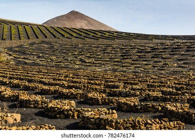 Stunning landscape with volcanic vineyards. Lanzarote. Canary Islands. Spain