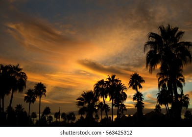 Stunning Late Summer Sunset in Tucson Desert with silhouetted Palm Trees